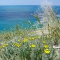 Высокий берег Анапы